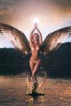 anadiomena-seagul-wings-03-2.jpg