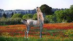 Anastasia P-  horse.jpg