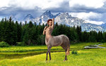 Olga Belova-horse.jpg